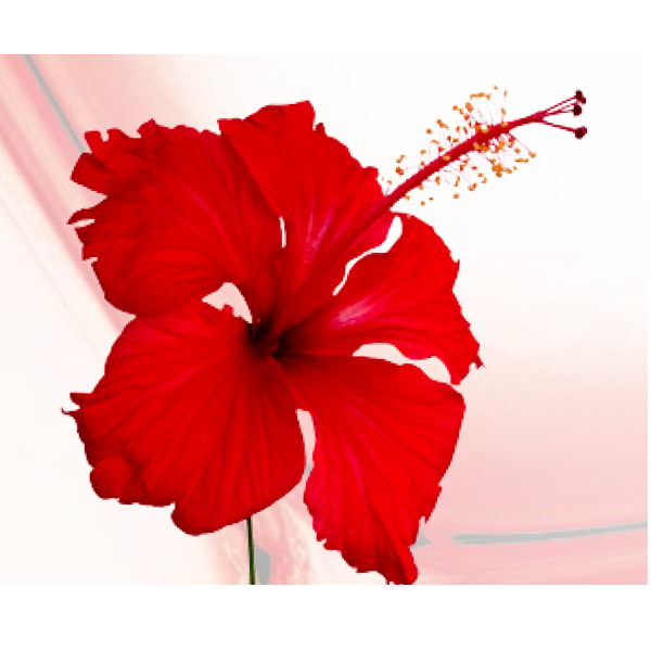 Hibiscus Flower Mandelic Peel